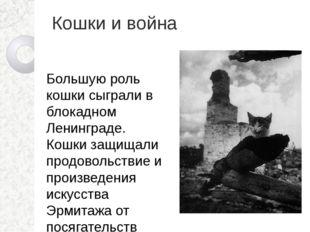 Кошки и война Большую роль кошки сыграли в блокадном Ленинграде. Кошки защища