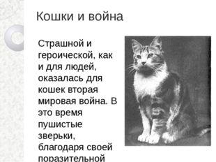 Кошки и война Страшной и героической, как и для людей, оказалась для кошек вт