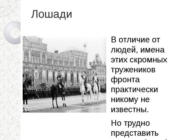 Лошади В отличие от людей, имена этих скромных тружеников фронта практически...