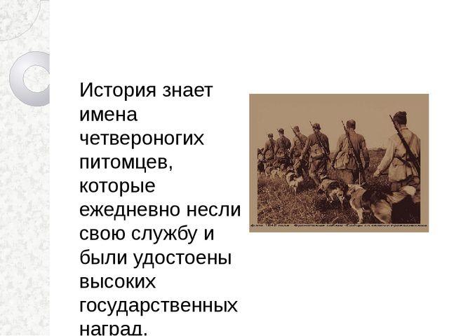 История знает имена четвероногих питомцев, которые ежедневно несли свою служб...