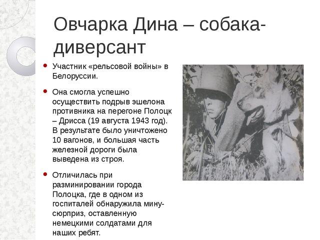 Овчарка Дина – собака-диверсант Участник «рельсовой войны» в Белоруссии. Она...