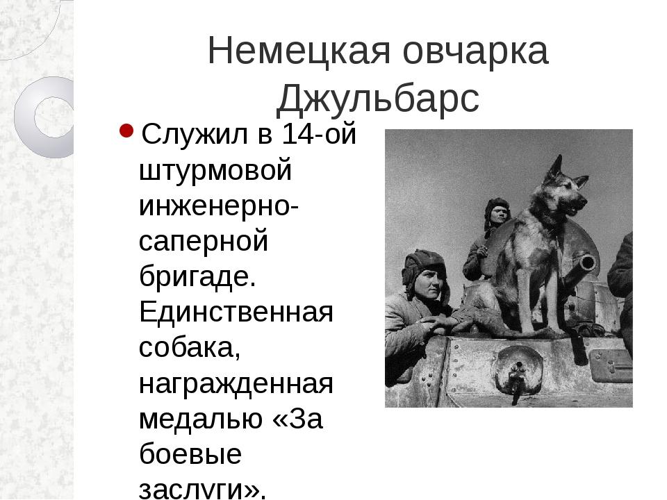 Немецкая овчарка Джульбарс Служил в 14-ой штурмовой инженерно-саперной бригад...