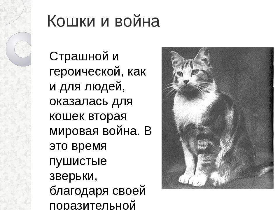 Кошки и война Страшной и героической, как и для людей, оказалась для кошек вт...
