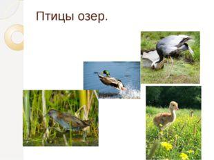Птицы озер.