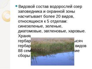 Видовой состав водорослей озер заповедника и охранной зоны насчитывает более