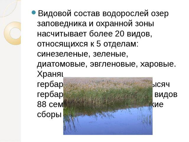 Видовой состав водорослей озер заповедника и охранной зоны насчитывает более...