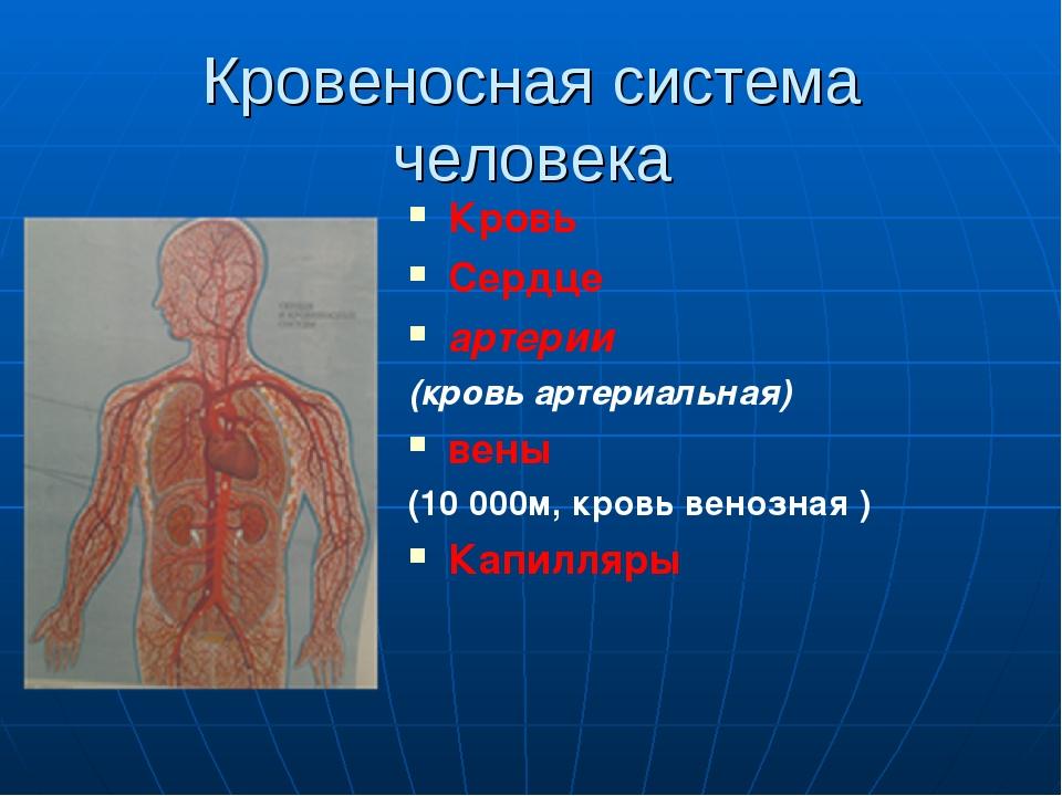 Кровеносная система человека Кровь Сердце артерии (кровь артериальная) вены (...