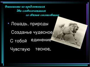 Лошадь, природы С тобой Чувствую .. Выпишите из предложения два словосочетан