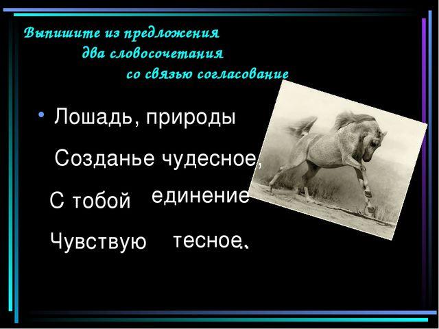 Лошадь, природы С тобой Чувствую .. Выпишите из предложения два словосочетан...