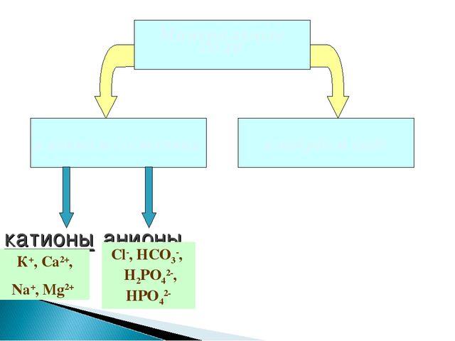 катионы анионы К+, Ca2+, Na+, Mg2+ Сl-, HCO3-, H2PO42-, HPO42-
