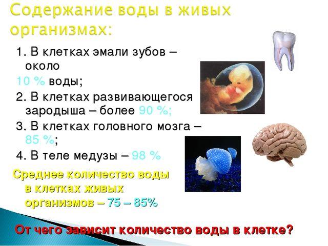 1. В клетках эмали зубов – около 10 % воды; 2. В клетках развивающегося зарод...