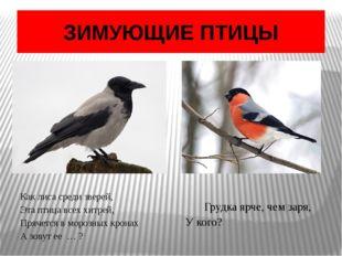 ЗИМУЮЩИЕ ПТИЦЫ Как лиса среди зверей, Эта птица всех хитрей, Прячется в моро