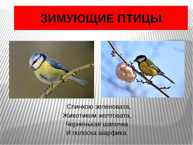 ЗИМУЮЩИЕ ПТИЦЫ Спинкою зеленовата, Животиком желтовата, Черненькая шапочка И...