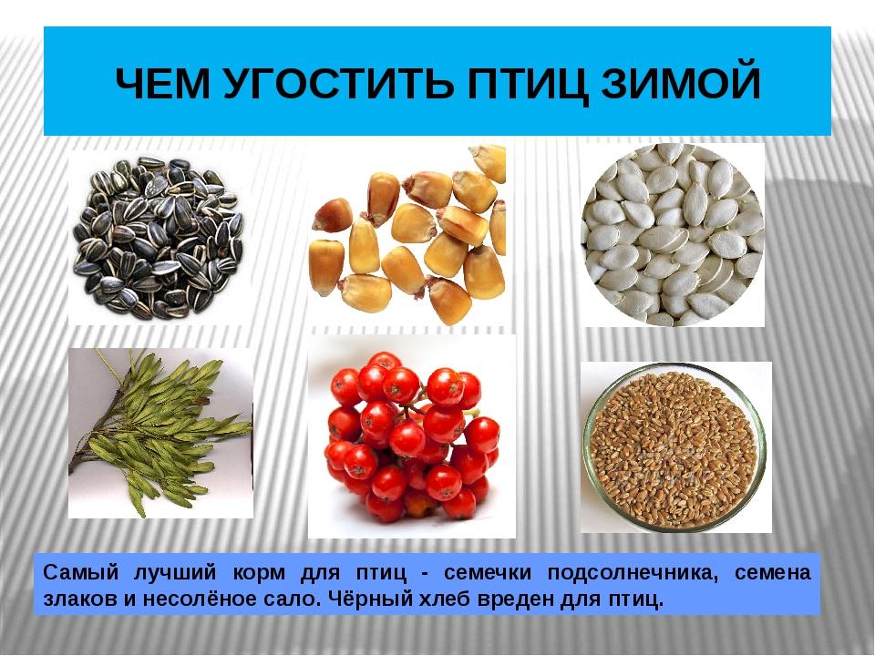 ЧЕМ УГОСТИТЬ ПТИЦ ЗИМОЙ Самый лучший корм для птиц - семечки подсолнечника,...