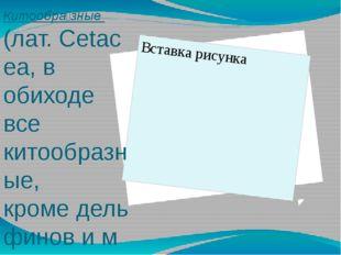 Китообра́зные (лат.Cetacea, в обиходе все китообразные, кромедельфиновим
