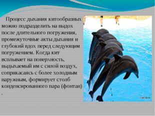 Процесс дыхания китообразных можно подразделить на выдох после длительного п