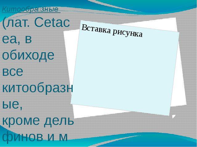 Китообра́зные (лат.Cetacea, в обиходе все китообразные, кромедельфиновим...