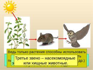 Цепи питания начинаются с растения. Это первое звено. Ведь только растения