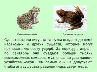 Одна травяная лягушка за сутки съедает до семи насекомых и других существ, ко