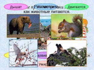 Вспомните признаки жизни животных. Дышат Питаются Развиваются Размножаются Ум