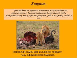 Хищные. Это животные, которые питаются пищей животного происхождения. Хищные