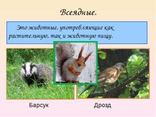 Всеядные. Это животные, употребляющие как растительную, так и животную пищу.