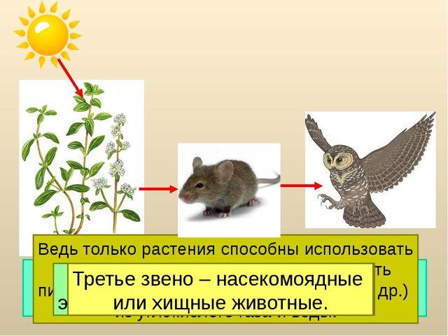 Цепи питания начинаются с растения. Это первое звено. Ведь только растения...
