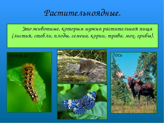 Растительноядные. Это животные, которым нужна растительная пища (листья, сте...