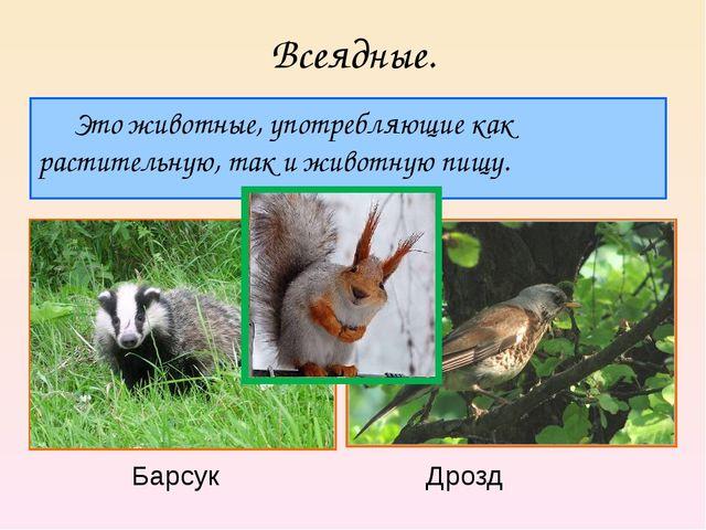 Всеядные. Это животные, употребляющие как растительную, так и животную пищу....