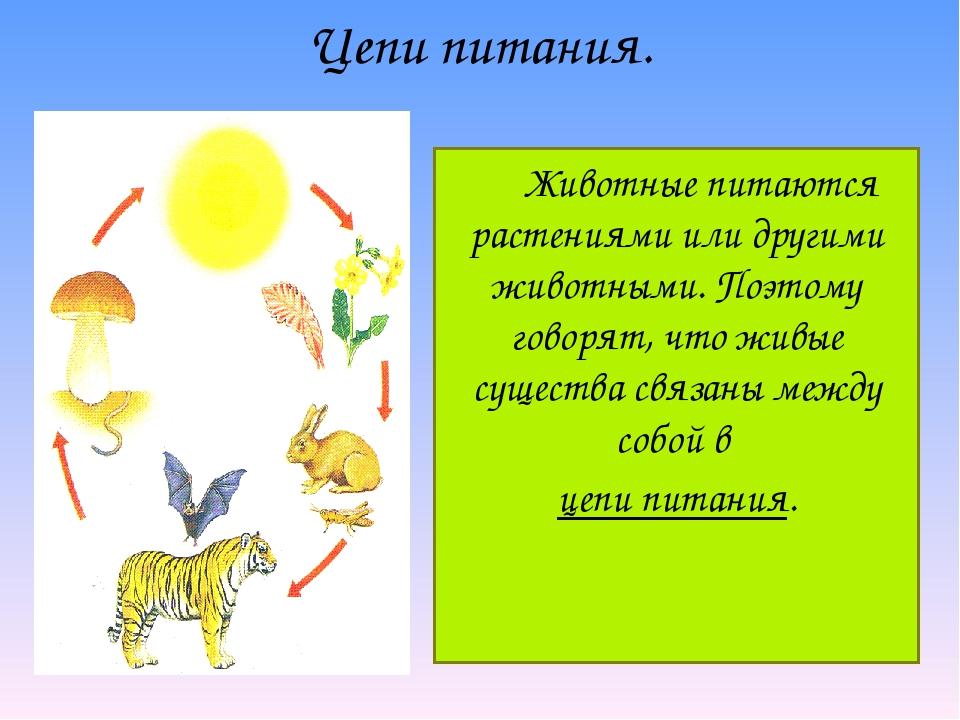 Животные питаются растениями или другими животными. Поэтому говорят, что жив...
