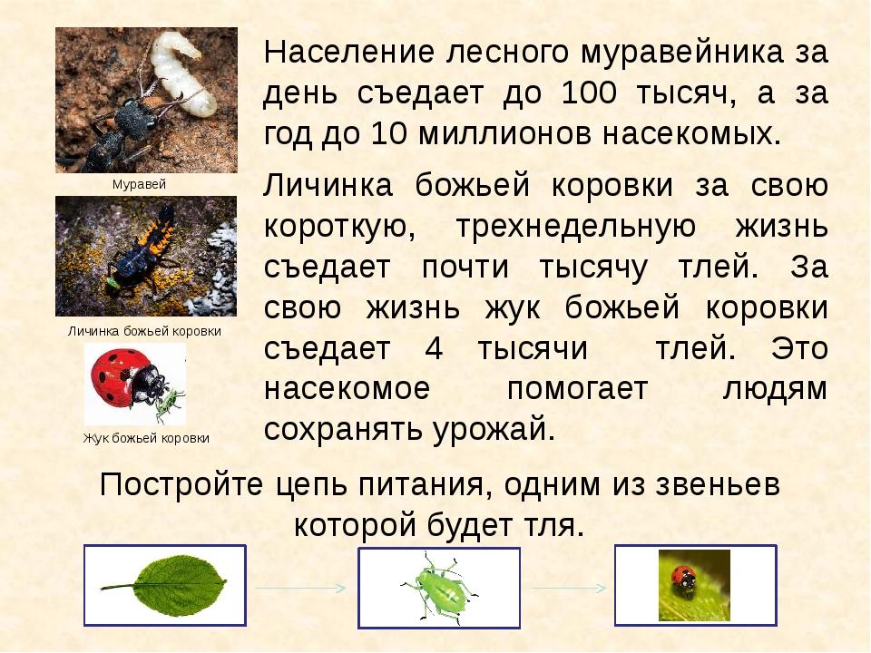 Население лесного муравейника за день съедает до 100 тысяч, а за год до 10 ми...