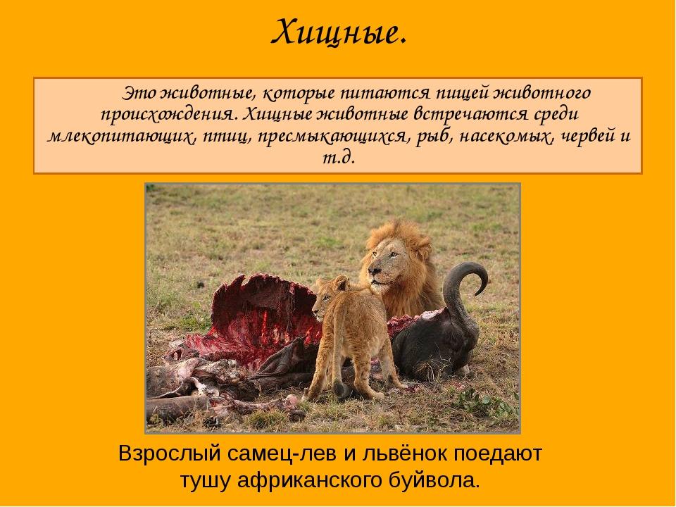 Хищные. Это животные, которые питаются пищей животного происхождения. Хищные...
