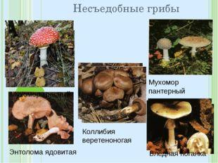 Несъедобные грибы Мухомор пантерный Энтолома ядовитая Коллибия веретеноногая