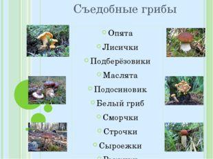 Съедобные грибы Опята Лисички Подберёзовики Маслята Подосиновик Белый гриб См