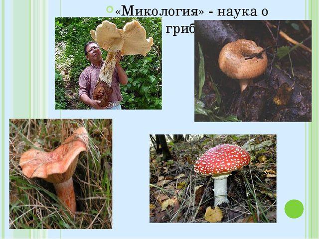 «Микология» - наука о грибах»