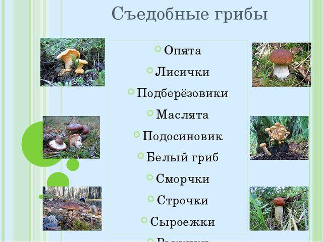 Съедобные грибы Опята Лисички Подберёзовики Маслята Подосиновик Белый гриб См...