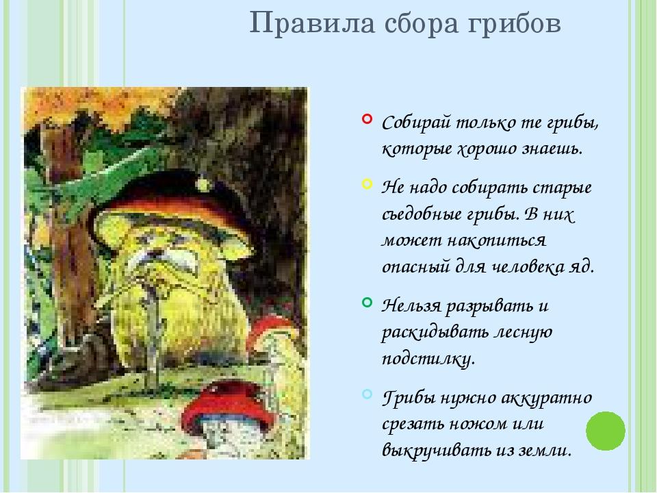 Правила сбора грибов Собирай только те грибы, которые хорошо знаешь. Не надо...