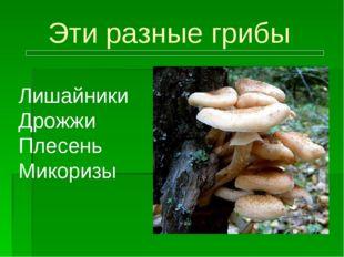 Эти разные грибы Лишайники Дрожжи Плесень Микоризы