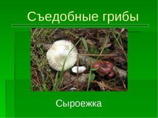 Съедобные грибы Сыроежка