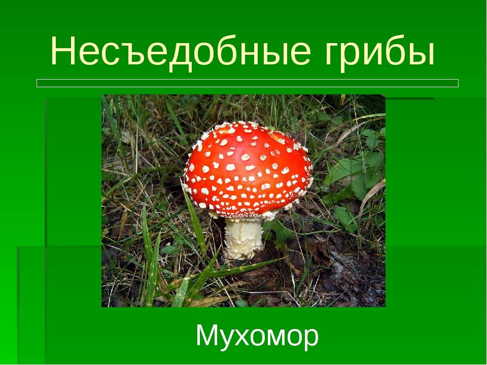 Несъедобные грибы Мухомор