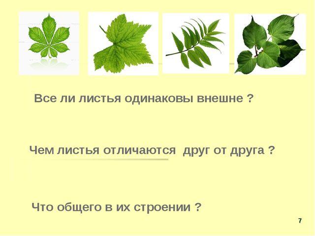 Все ли листья одинаковы внешне ? Чем листья отличаются друг от друга ? Что о...