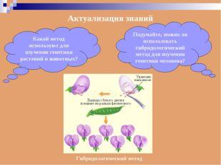 Актуализация знаний Какой метод используют для изучения генетики растений и ж