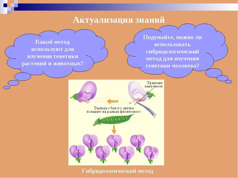 Актуализация знаний Какой метод используют для изучения генетики растений и ж...