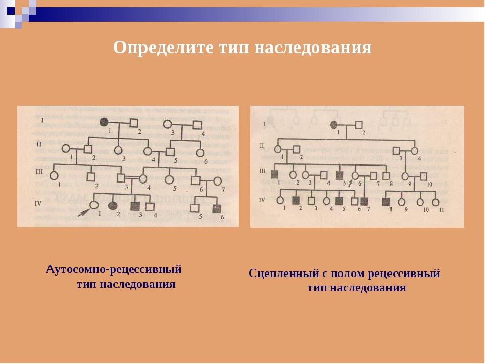 Определите тип наследования Аутосомно-рецессивный тип наследования Сцепленный...