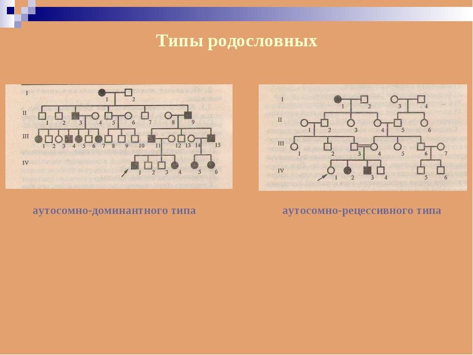Типы родословных аутосомно-доминантного типа аутосомно-рецессивного типа
