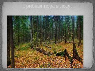 Грибная пора в лесу.