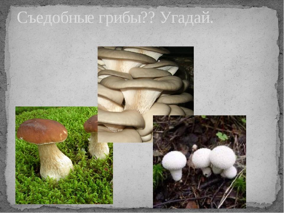 Съедобные грибы?? Угадай.