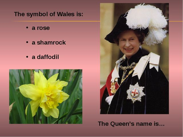 The Queen's name is… The symbol of Wales is: a rose a shamrock a daffodil