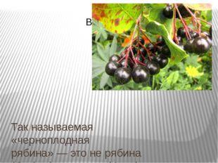 Так называемая «черноплодная рябина»— это не рябина (Sorbus), аарония(Aron