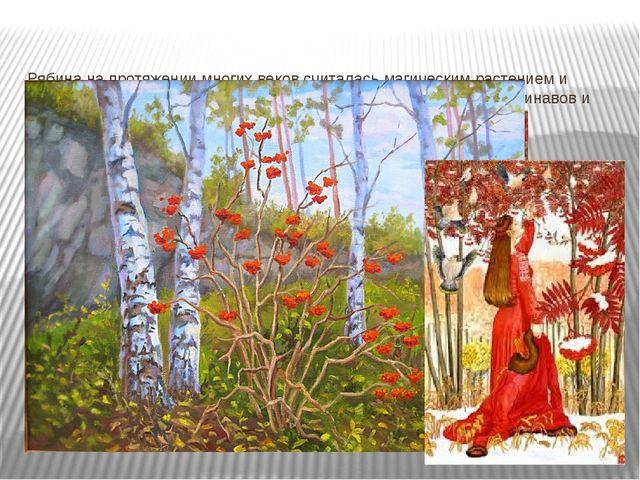 Рябина на протяжении многих веков считалась магическим растением и играла важ...